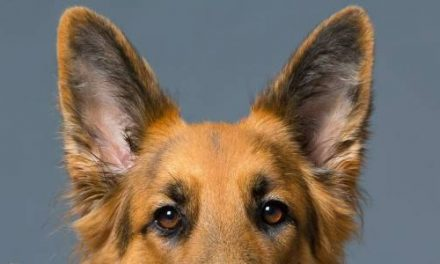 4 Things to Know Before You Get Your Dog Photographed
