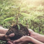 Know Why Reforestation is a Boon to The Environment